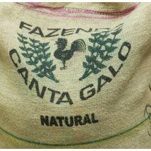 Brazil  Fazenda Canta Galo